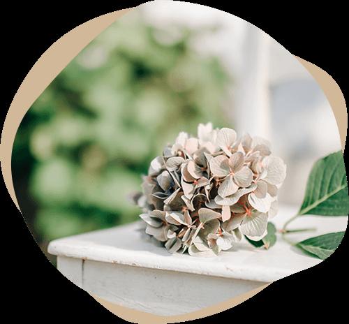 Hortensienblüte auf Stuhl – Trauerrednerin Meike Schüttkus