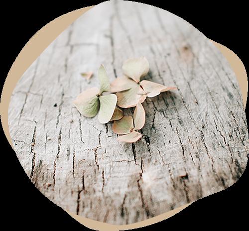 Motiv für Beerdingung - Blätter einer Hortensie auf einem Baumstamm